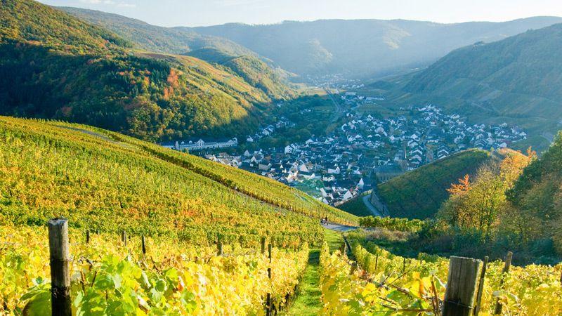 Ahr, Rhen & Mosel - vinprovningar hos små kvalitativa producenter