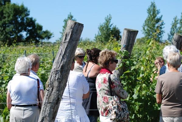 Kullabygden i skördetid med Arilds vingård