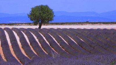 Nice, Provence & Barcelona - konst, vin & anrika städer