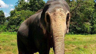 Tropiska ön Sri Lanka med världsarv, elefanter, sol och bad