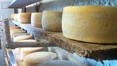Lagring av ost.
